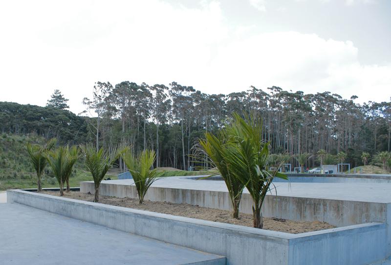 maz.palmtrees